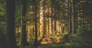 """7 Tips For Living in the Woods: Are You Ready? - To escape the stresses of everyday life, some people opt to escape to nature. Some people escape for only a few days, while others do it indefinitely. The thing about living in the woods is that you can't just """"go out and do it""""."""