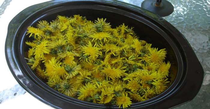 A Yummy Collection Of Dandelion Recipes To Try Out - food