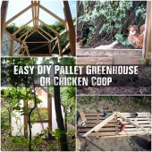 Easy DIY Pallet Greenhouse Or Chicken Coop