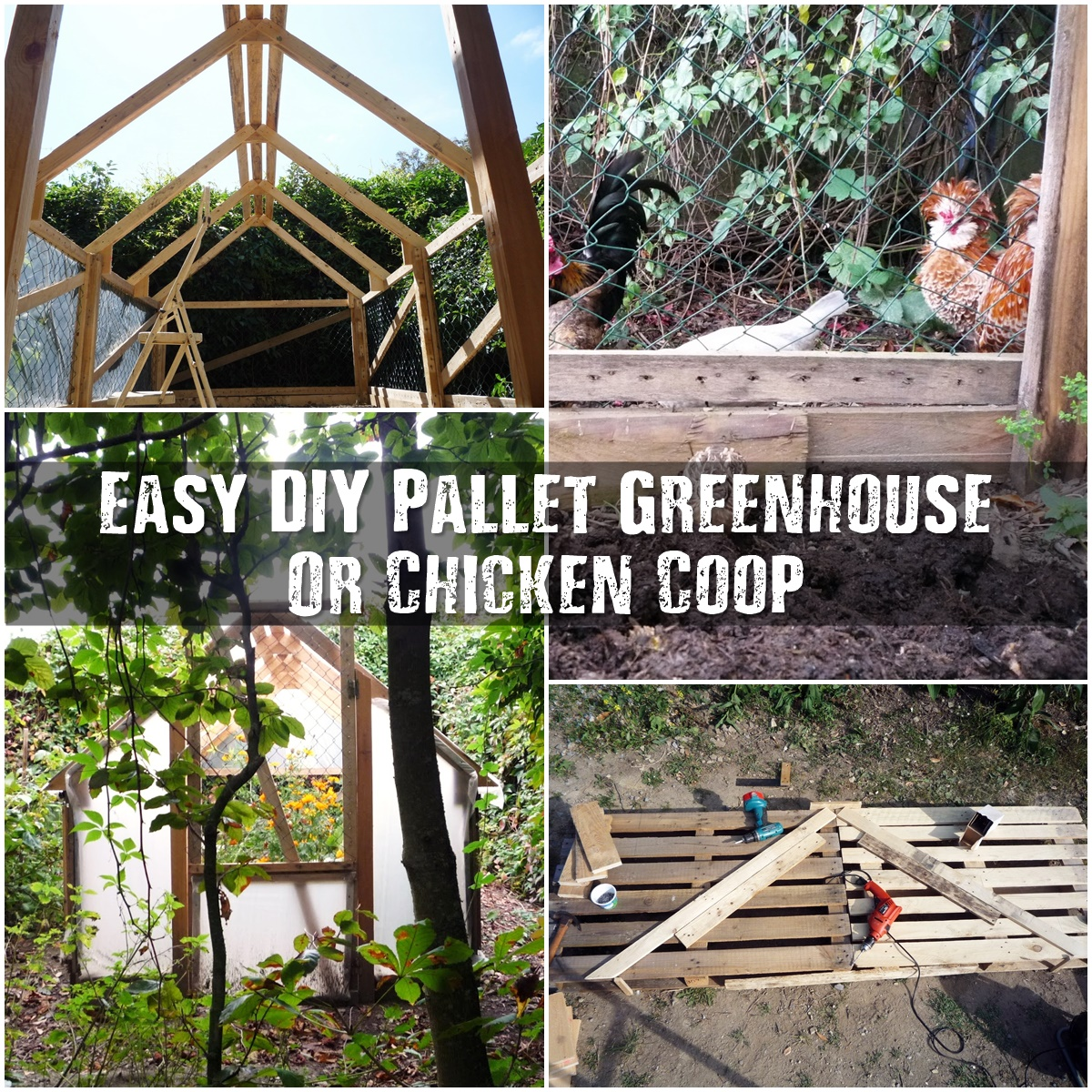 Easy diy pallet greenhouse or chicken coop shtf for Build a greenhouse from pallets