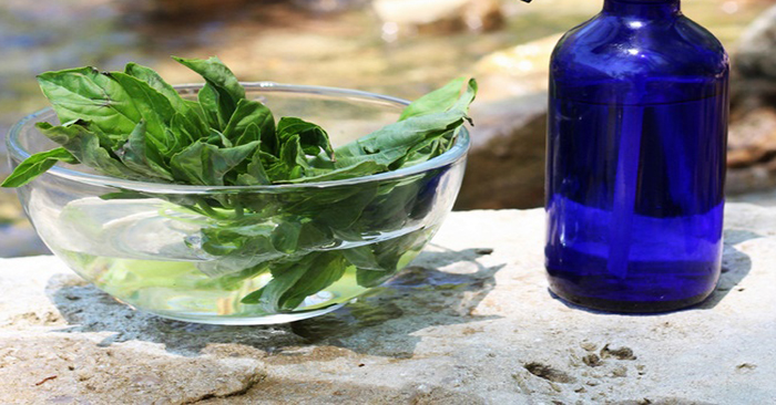 Homemade Basil Mosquito Spray - I never knew that Basil had the ability to keep these nasty, disease carrying mosquito's away! I hate putting chemicals on my body and the stuff you buy from the store can add up and end up costing you a fortune. This is an excellent natural alternative.