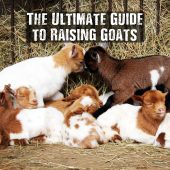 The Ultimate Guide to Raising Goats