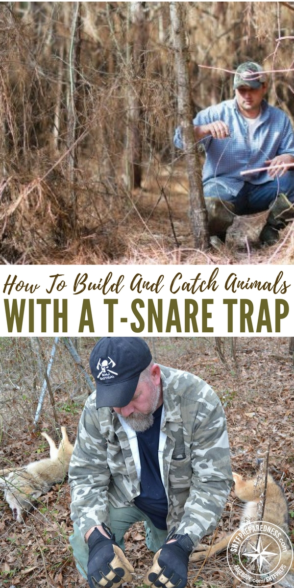 "How To Build And Catch Animals With A T-Snare Trap - The T-snare trap is one of the easy traps to build and is very effective at catching small to medium and in some cases large animals. Having the skills and know how to build any trap is an advantage in any situation so having at least this in the ""skill bank"" may just help you out if you are bugging out or find yourself lost and in a survival situation."