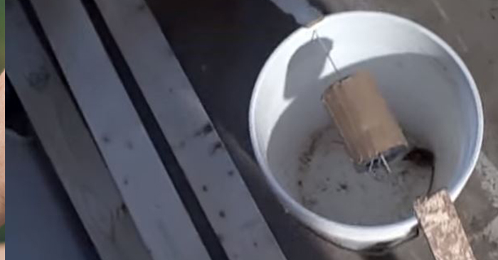 How To Build A Self-Resetting Mouse Trap - These 5-gallon bucket mouse traps are cheap and easy to build, easy to use and easy to service. I know the regular mouse traps are cheap but this trap can also catch rats too. The best part is it's self resetting.