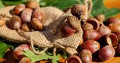How To Make Acorn Coffee - Acorn coffee is easy to make and filled with nutrients that make any cold morning or evening satisfyingly awesome!