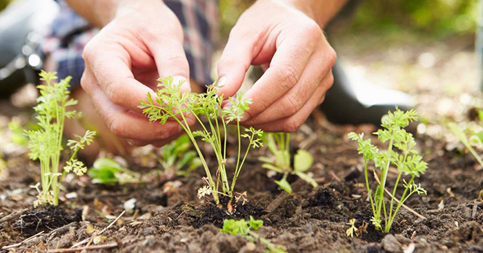 Learn Exactly How to Grow 25 Vegetable Garden Favorites for Maximum Harvests - When the SHTF there will be a period of panic and turmoil the streets may be dangerous and the stores will be chaos. Do you really want to stake your safety trying to obtain items you think you'll need to sustain your family? Are you prepared to lose your life trying to get these things in a disastrous situation?