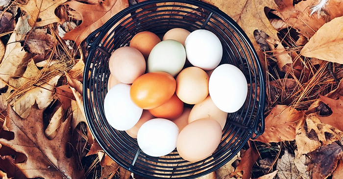 How to: Safely Preserve Fresh Eggs for 9 Months – Truth is ...