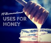 10 Unconventional Uses for Honey - Honey is mostly used to put on things like toast or cereal but did you know that it goes much deeper than a yummy taste. Check out this great list of 10 unconventional uses for honey.