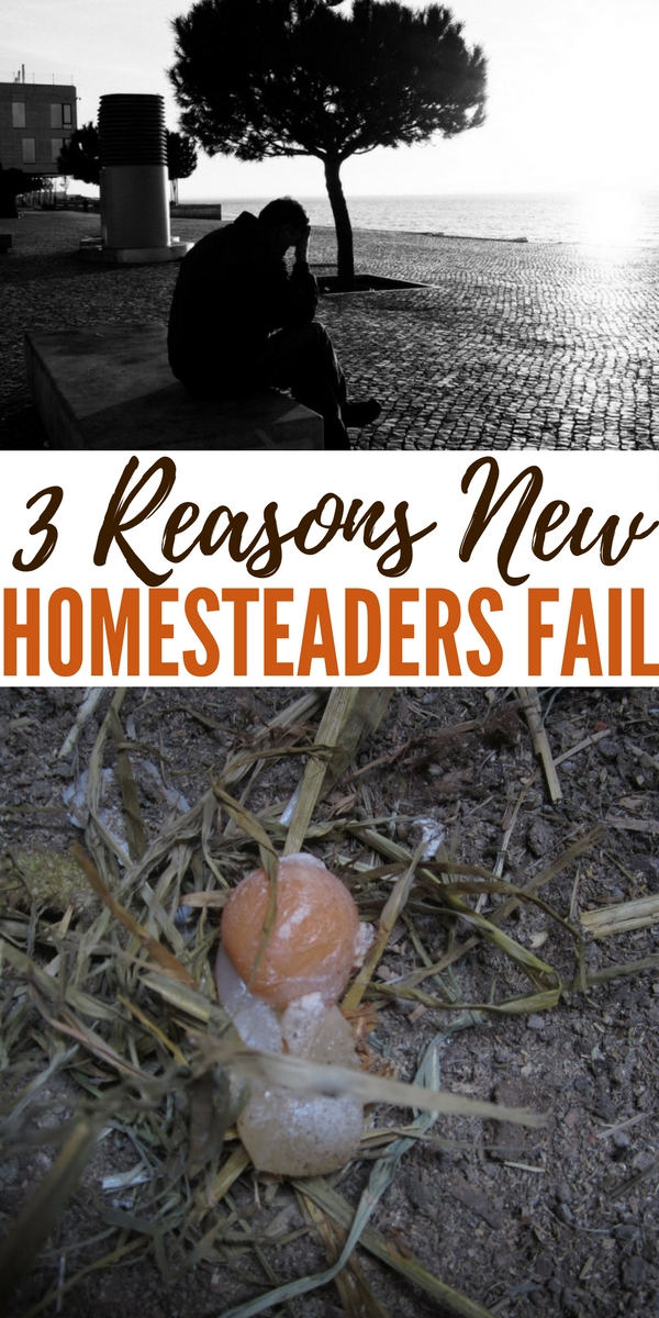 """3 Reasons New Homesteaders Fail - Failure can come in all forms and isn't always a bad thing. If you think about it, all of the things we use that makes our lives """"easier"""" came about through a lot of trial and error (aka failure). Homestead failure, on the other hand, can have some pretty devastating effects that affect not only the homestead itself, but your entire life and in all areas."""