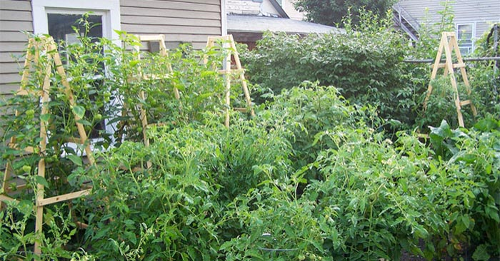 DIY Tomato Ladders - Tomato Ladders are a great alternative to tomato cages and when correctly anchored to the ground can be sturdier than your standard cages. Second only to the amazing tomatoes that you will grow is the super convenient slim profile for storage; just remove a few screws and they can be stored flat!