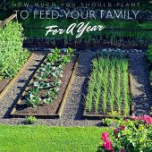 How Much You Should Plant To Feed Your Family For A Year