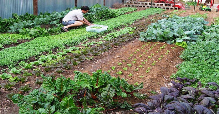 How Much You Should Plant To Feed Your Family For A Year - Think about how much your food your family would need to survive for a year if SHTF. Deciding how large your vegetable garden will be requires a number of factors; how many members, what types of vegetables they like and the ability to store the excess. This will help!