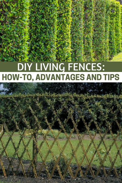 DIY Living Fences: How-To, Advantages and Tips - What a perfect addition to any sized garden. Cheap and easy to do, you would be mad not to have this type of fence in your garden.