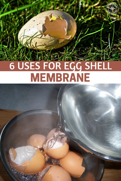6 Uses For Egg Shell Membrane - For something that is normally thrown out as rubbish, the membrane lining in an egg shell has some surprising uses. That's right, crack that egg and use it as normal. Then, instead of throwing the shell away, peel that thin white skin or membrane out and use it as an aid to healing.