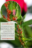 Completely Natural Pest Control Methods For Your Garden - Beetles, aphids, caterpillars and a whole host of baddies descend into your garden and they are not taking any prisoners today. They are set on plundering and looting everything they see till there is nothing more left to destroy. How can we get rid of them?