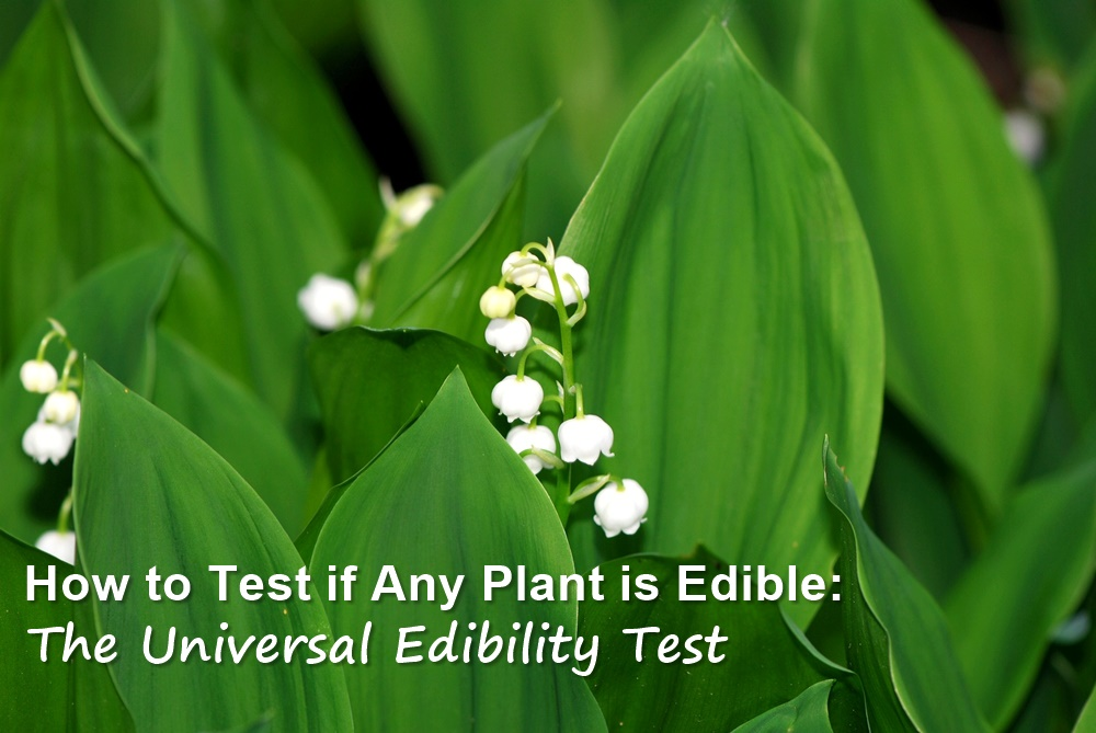 How to Test if Any Plant is Edible - There are about 300,000 species of plants on this planet, so it is nearly impossible to learn whether each and every one is edible. The universal edibility test can help with this, since it breaks down the plant into different parts and steps you through tests to determine edibility.