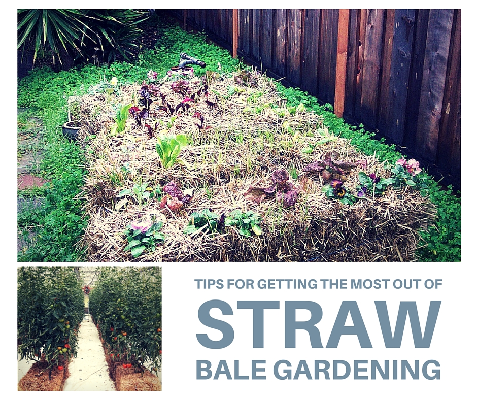 Tips For Getting The Most Out Of Straw Bale Gardening