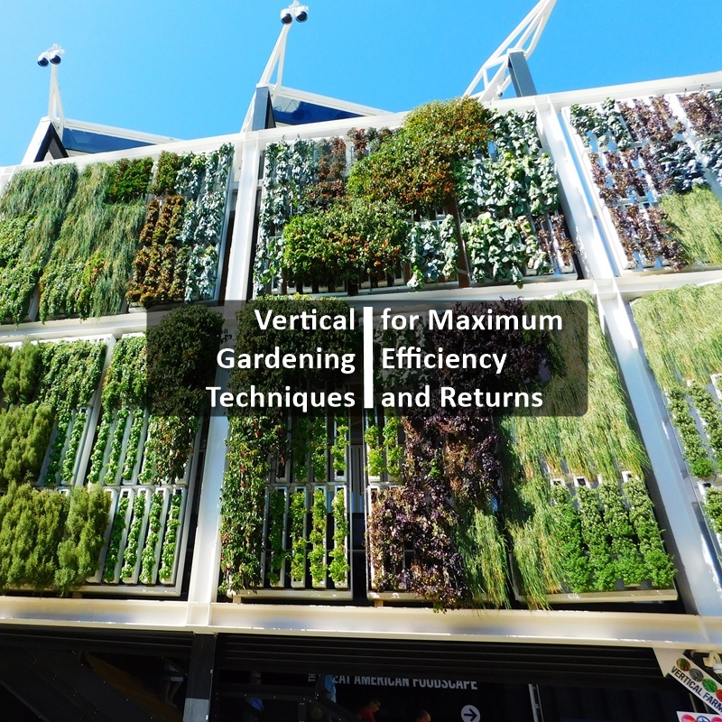 Vertical Gardening Techniques For Maximum Efficiency And