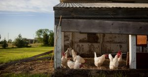 Awesome FREE Chicken Coop Plans With Photos— Setting up a new homestead when you're on a budget can be tough. It requires a creative spirit, scrounging ability, and some basic DIY skills. Backyard chicken coops continue to gain in popularity and I don't see any signs of it slowing down.