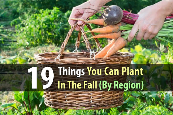 19 Things You Can Plant In The Fall (By Region) - Think it's too late to plant another round of crops? Think again. There are plenty of delicious vegetables you can still plant in September thanks to their short growth cycles. If you get started right away, you should be able to get a good harvest before the first freeze.