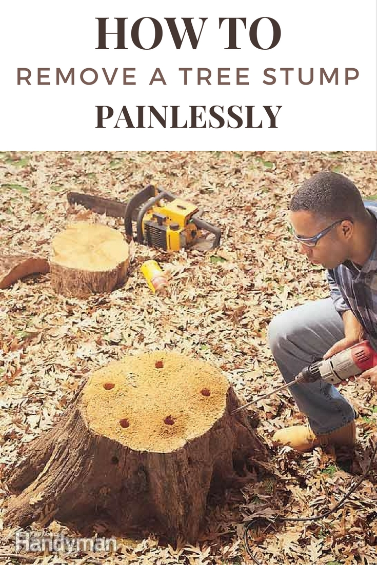 How to Remove a Tree Stump Painlessly - SHTF Prepping ...