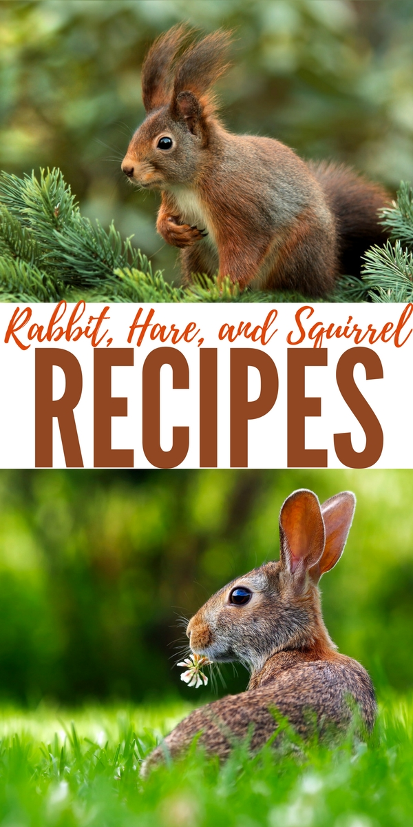 Rabbit, Hare and Squirrel Recipes — If SHTF you need protein to stay alive. Rabbits, hares and squirrels will be abundant and pretty easy to catch. Remember, there will be no supermarkets, Walmart and the like will be gutted in 3 days.