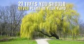 21 Trees You Should Never Plant In Your Yard - Check out 21 trees that you should probably consider NOT planting. With explanations why and pictures to show you the trees, hopefully you can make a batter decision for your garden, and sanity.