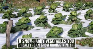 8 Snow-Hardy Vegetables You (Really) Can Grow During Winter -