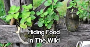 Hiding Food In The Wild — If and when a crisis hits, one of the most important things for you and for those depending on you will be food. Having access to ample backup food, properly hidden somewhere, will make all the difference between life and death of you and your bug out group.
