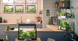 Indoor Winter Gardening Tips and Tricks A Must Have In Case The SHTF - I love gardening indoors, I love the smell and the ease of just walking into a room and getting a few tomatoes or a fresh crop of basil or mint. If SHTF or we have adverse weather knowing the tips and tricks of growing food inside could save your life.