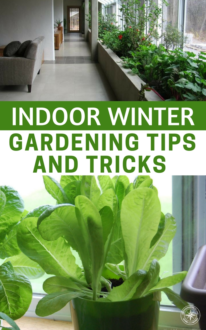 Excellent winter gardening indoors ideas image design house plan indoor winter gardening tips and tricks a must have in case the shtf workwithnaturefo