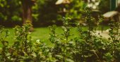 101-gardening-secrets-experts-never-tell-you-fbcover