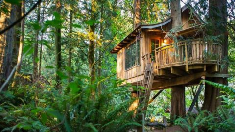 Build A Low Impact Woodland Home For Less Than $5000