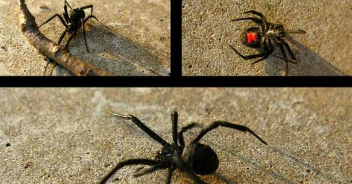 13 Great Ways to Keep Spiders Out of Your Home Naturally — Lets all be honest for a second, we all hate spiders, with the exception of a few, seeing a spider causes your heart to beat faster and your fight or flight, usually the latter, to kick in and let out a little scream.