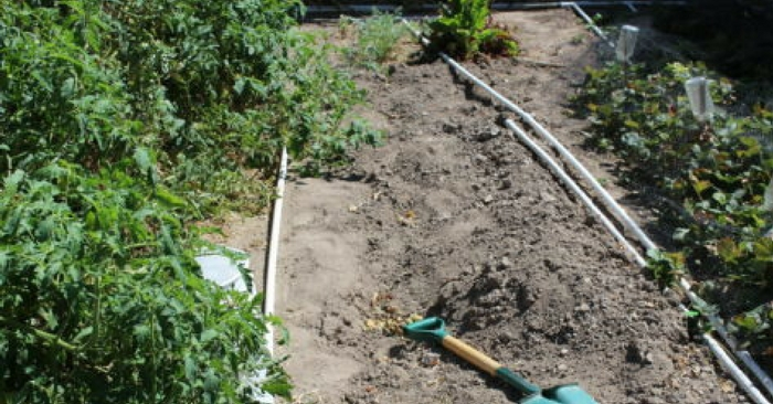 Learn how to Trench Compost — Traditional composting can be a bit of a pain! You have to get just the right mix of browns and greens. Then you have to turn the pile and water the pile just to get everything to work out!