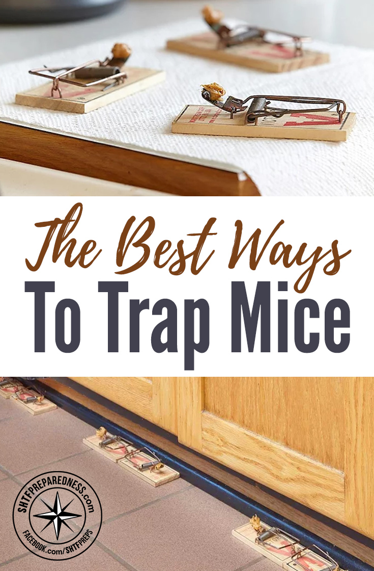 the best ways to trap mice. Black Bedroom Furniture Sets. Home Design Ideas