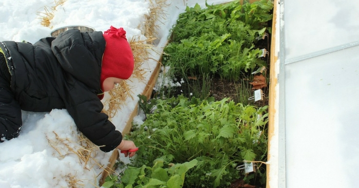 The Secret To Winter Gardening - Gardening in any weather can be tough, but if you want to grow all year round obviously winter is the hardest season. Cold frames are so easy to make for free, it would be silly not to try your hand at this this winter.