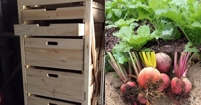 Vegetable Storage In A Root Cellar