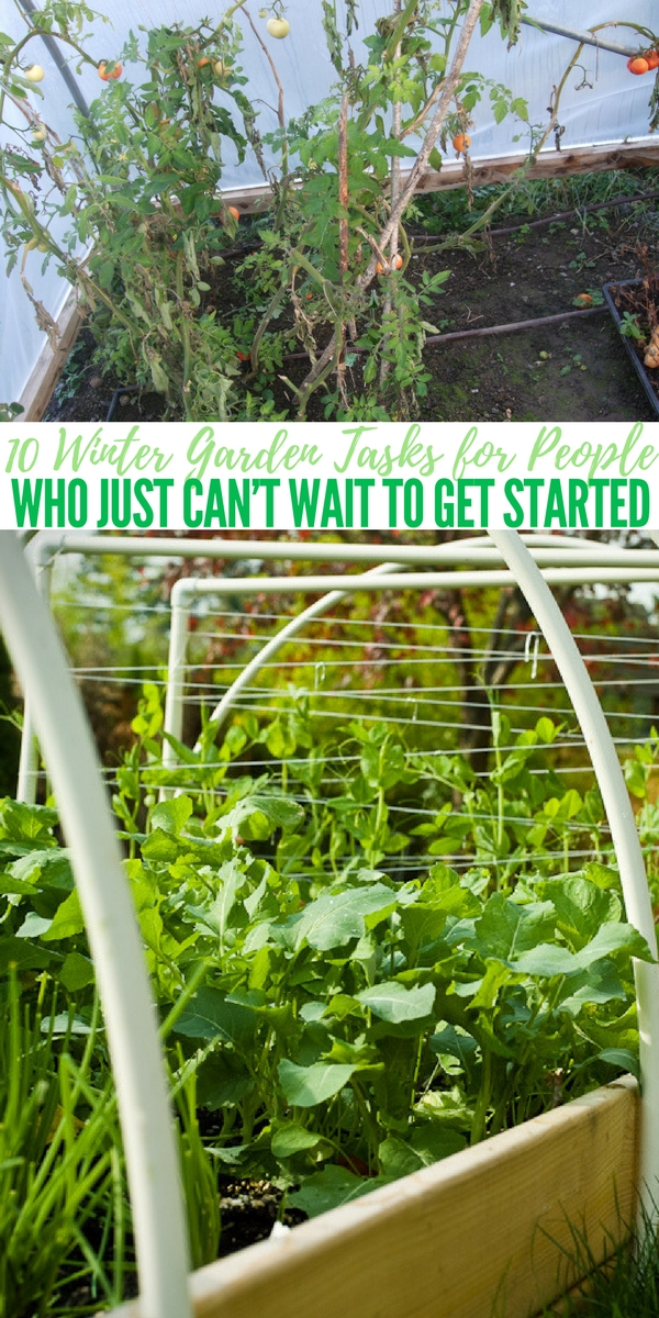 10 winter garden tasks for people who just can t wait to