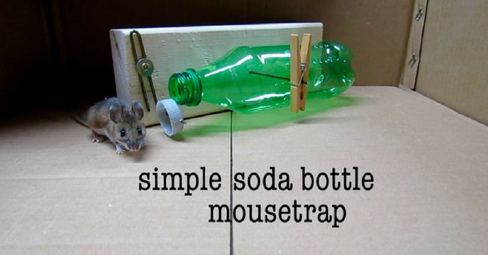 DIY Simple Soda Bottle Mousetrap — DIY pest control is a great way to save money, and may even be a necessity if professional pest control is out of reach. Store bought poison or natural repellents work especially well for a lot of pests, but poison can be dangerous to your family and natural options don't quite cut it for bigger pests like mice.