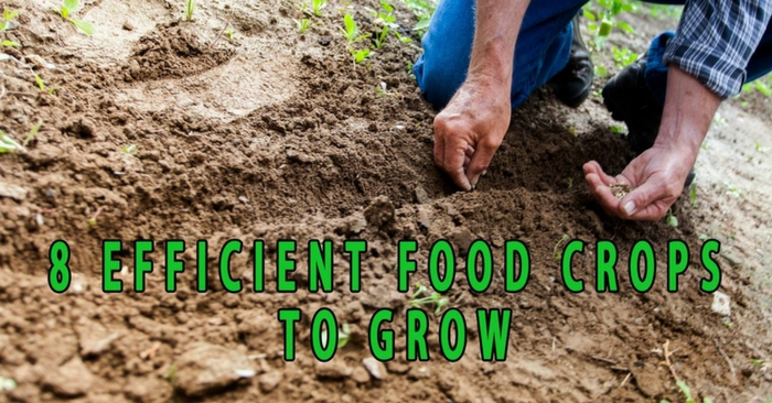 Eight Efficient Food Crops to Grow — Many families grow their own food in order to become self-sufficient. There is nothing better than home grown food. It's cheaper, fresher and often better tasting than the one you buy from the supermarket.