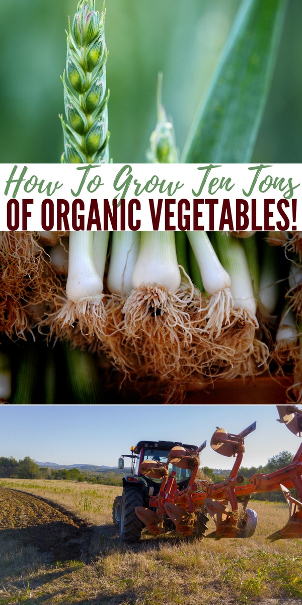 How To Grow Ten TONS of Organic Vegetables — If you're homesteading or have a farm, you are probably always looking for ways to maximize your produce yield. Obviously, you don't want to lose time or resources on a bad harvest, plus there is always the winter to stock up for. Just imagine, though, if you could master your crops in such a way that you could make a profit from them.