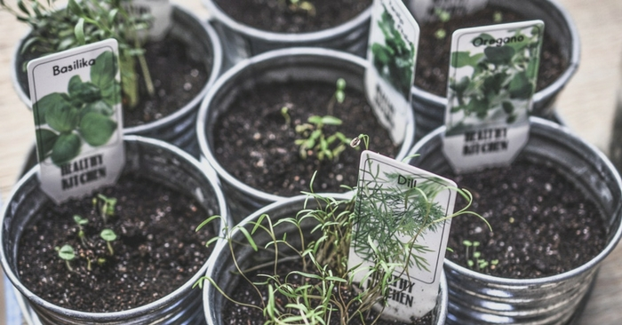 How to Grow Your Own Herbs for Cooking — Fresh herbs are a wonderful and healthy way to season food, and many of them even have medicinal properties. Some of us are intimidated by the prospect of growing their own herbs, but as Spark People's tutorial shows us, it just needs a little bit of knowledge and patience.