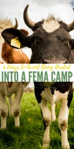 6 Ways to Avoid Being Herded into a FEMA Camp — Having everything you own reduced to a numbered cot in a FEMA camp is not how you want to find yourself in an emergency. It is not only a terrible position to find yourself in, but it could also be a dangerous one.