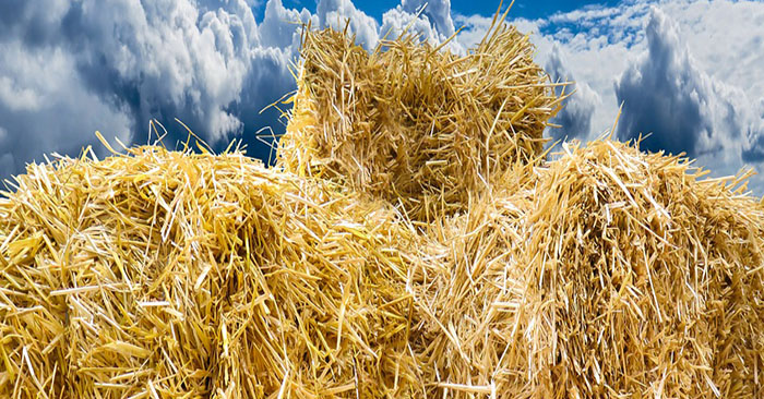 Alternative Food Garden: Straw Bales - Straw bales is one of those things that most people don't think of when they think about growing peas and carrots. There are numerous vegetables that you can plant in a straw bale and numerous advantages, too!