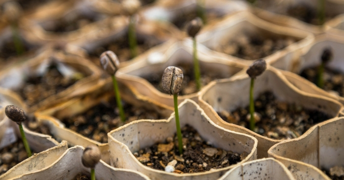 February Seed Starting Schedule — February is the month when indoor seed starting begins for most gardeners. Even those of you that live in some of the coldest parts of the country will be able to start a few seedlings in February.