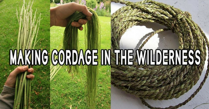 Making Cordage in the Wilderness — The art of bushcraft teaches us that Mother Nature can provide everything we need to survive. You can forage for food, you can use medicinal plants to heal your body and you can build a sturdy shelter with the resources you can find around you.