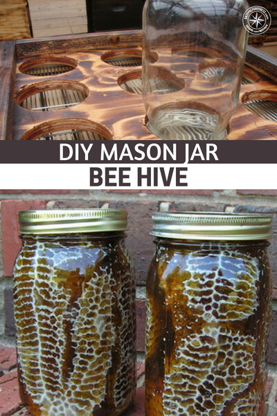 DIY Mason Jar Bee Hive — Making a mason jar beehive is super easy and the benefits of having one will help you out beyond belief. These are so simple this hive thrives in urban areas too.
