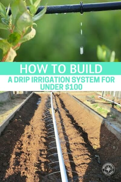 How To Build A Drip Irrigation System For Under $100 — A drip irrigation system can save you time, money and conserve water. This drip irrigation system can be turned on and left to do its job without you having to stand over it to monitor its progress.