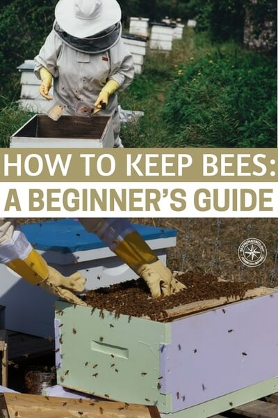 guide to bees and honey pdf